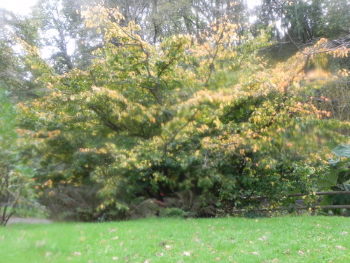 Parc Botanique  Novembre 2014