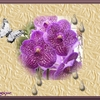 orchidée violette.jpg