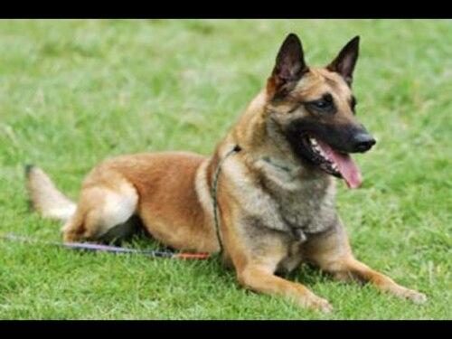 Val-d'Oise : il tue son chien et le jette à la poubelle