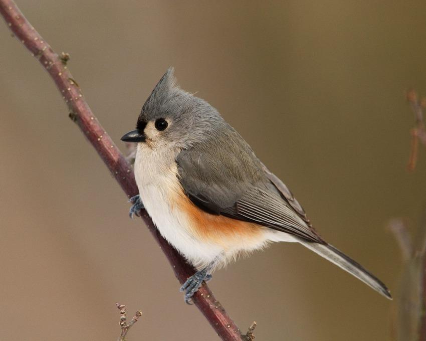 5 Images d'Oiseaux