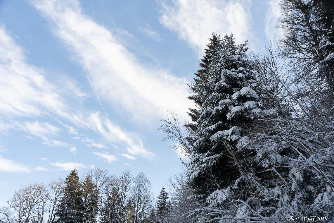 Les neiges de Février 2019 - 1