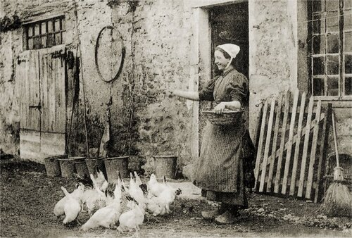 01- Les poules à la ferme