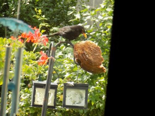 La becquée des oiseaux