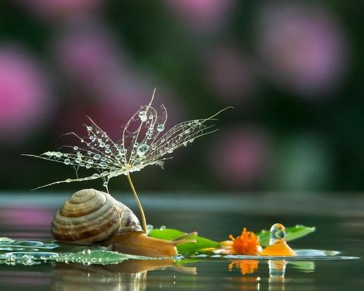 escargot17
