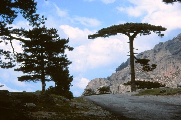 Sur les routes de Corse.