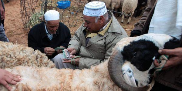 Mardi, les fidèles regagneront Mina pour y immoler une bête, généralement un mouton, en souvenir du sacrifice que faillit accomplir Abraham en voulant tuer son fils sur ordre de Dieu. Ce rituel marque le début de la grande fête d'Al-Adha.