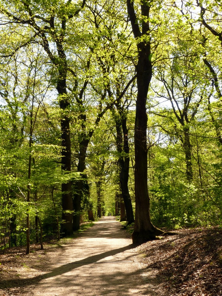 Allée du parc Henri-Sellier