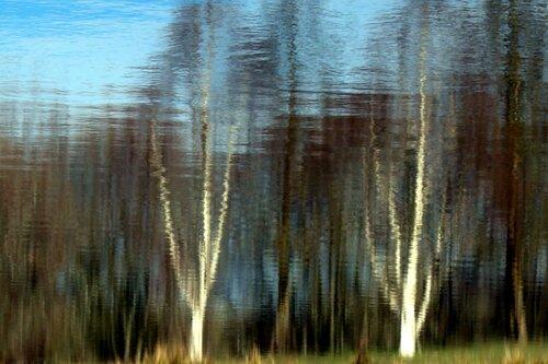 Les arbres tremblent