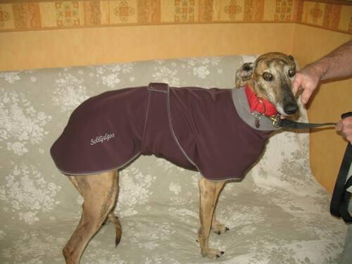 Manteaux pour vos chiens ..