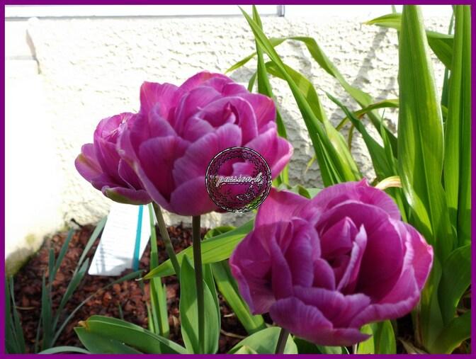 les fleurs du moment
