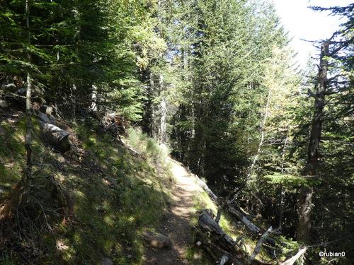 Ultime montée dans la forêt
