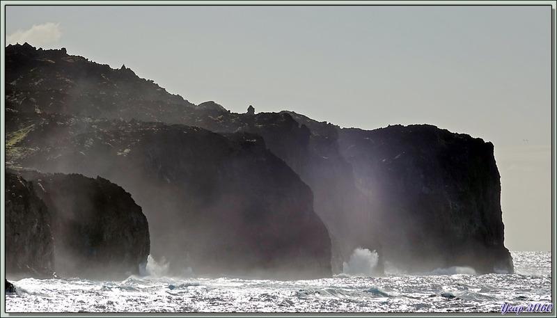 Dans le prolongement de Cave Point, nous avons le superbe Stonyhill Point et toujours des vaches en totale liberté - Tristan da Cunha