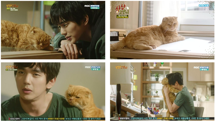 Imaginary Cat [ K-Drama ]