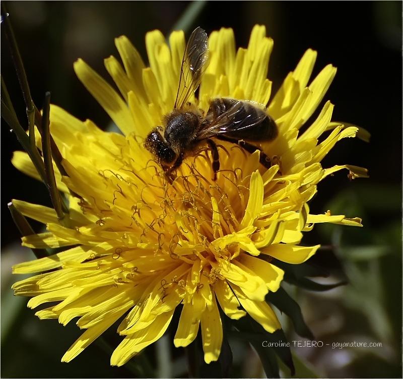 Overdose de pollen