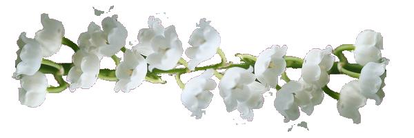 Sublime petite fleur