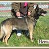 Hermès 3