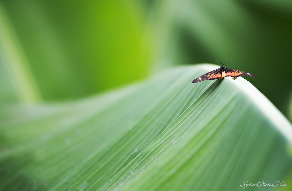 Autre petit papillon