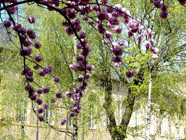 Fleurs printemps 1 Marc de Metz 28 03 2013