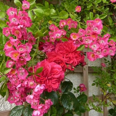 Le ciel nous dit mars, les roses nous disent juin...