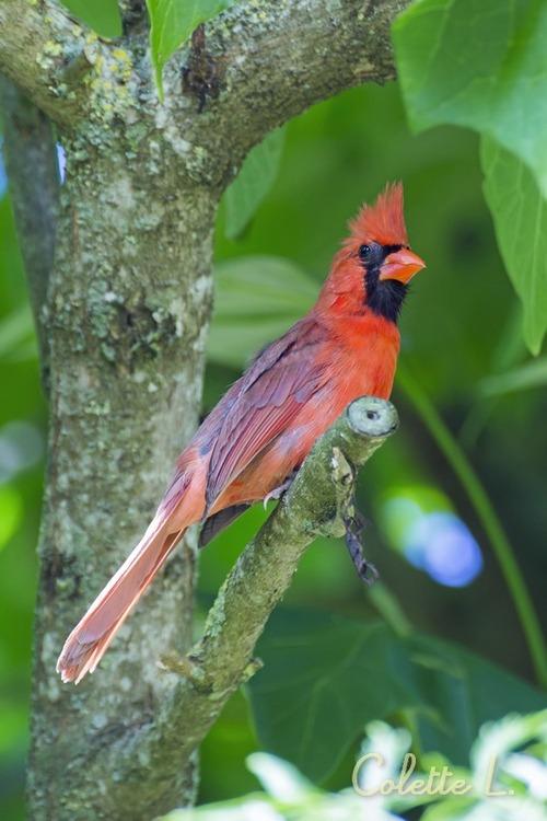 Monsieur le cardinal