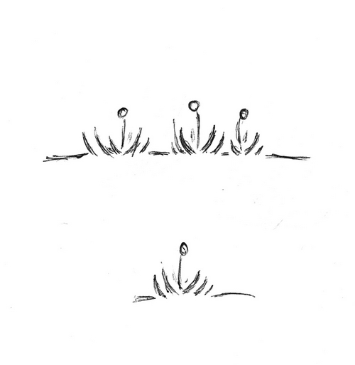 Plantes bizarroïdes II