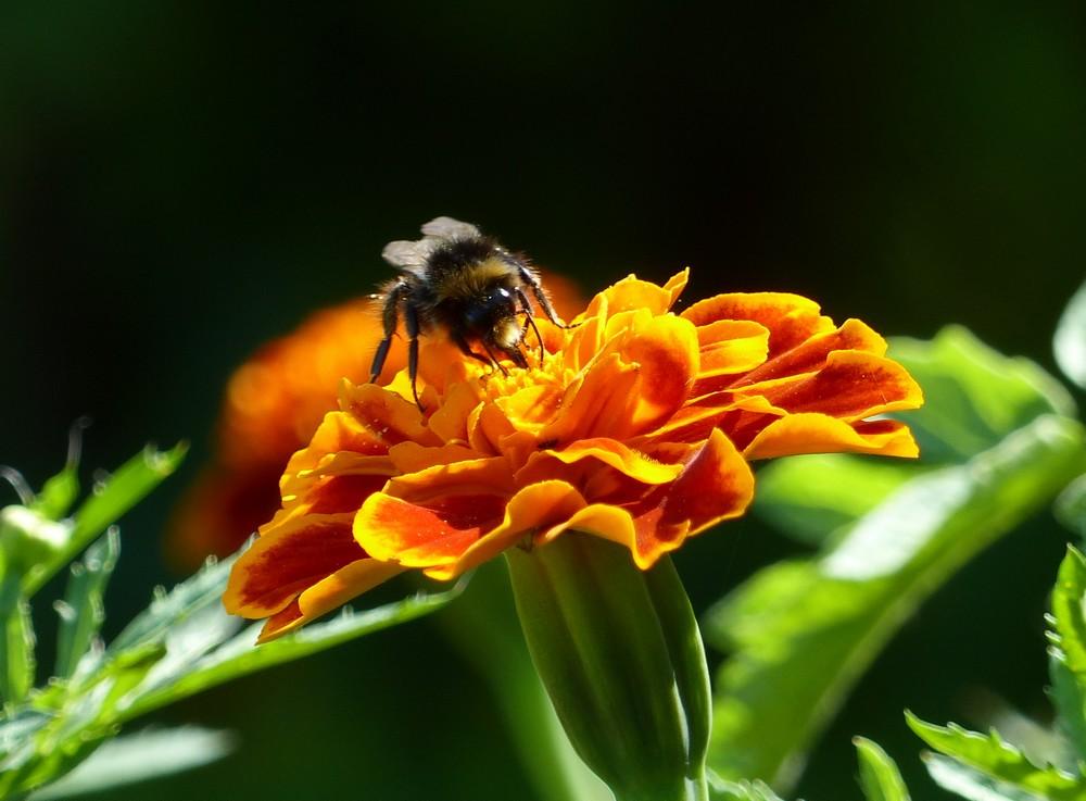 Fleurs d'un été caniculaire