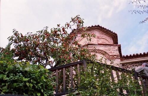 Les orangers de Varlaàm
