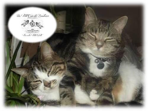 Mes amours des petits chats