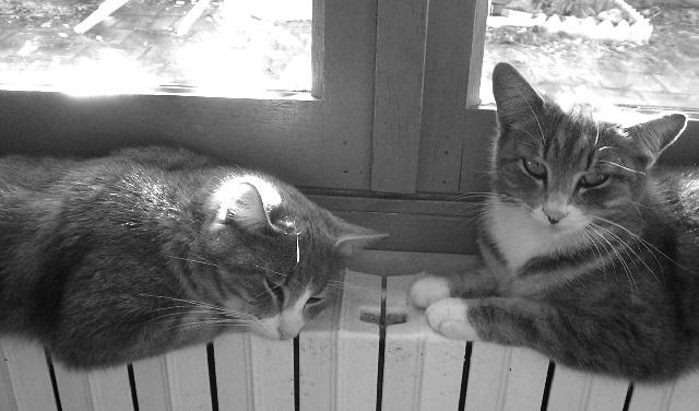 Toto et Lilo