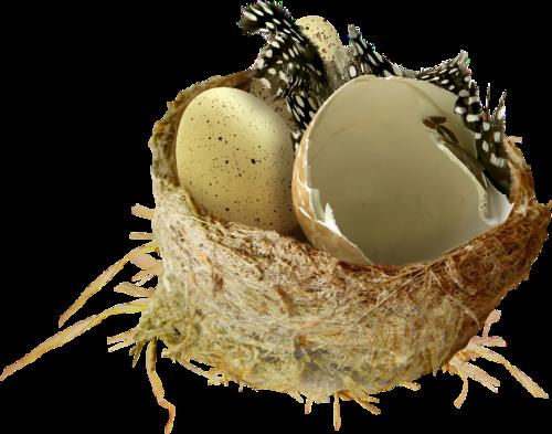 Pâques nids 1