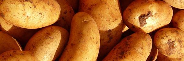 planter-pomme-de-terre-patate-agriculture-05-ban
