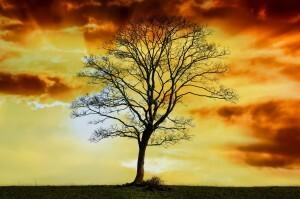tree-219714_1280