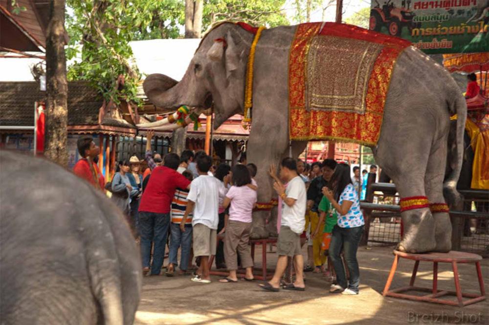Ayutthaya - Passer sous un éléphant en tournant autour est un porte-bonheur