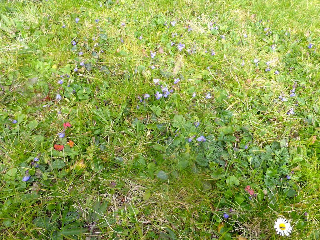 Quelques fleurs de mon jardin pour reprendre: