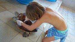 Kaléna et les tortues