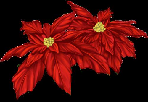 Fleurs de Noël / 6