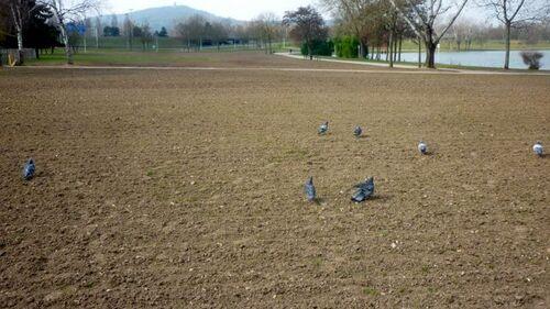 Là où les socialistes passent, même l'herbe ne repousse pas !