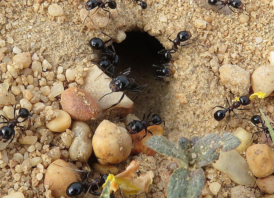 des fourmis sur ... !