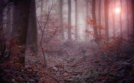 «Pensées Hivernales en Tabarnac»  – Inspirées par le groupe FORTERESSE