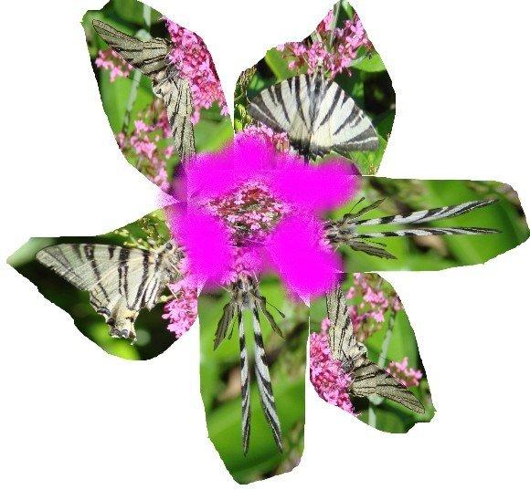 fleur-copie-1.jpg
