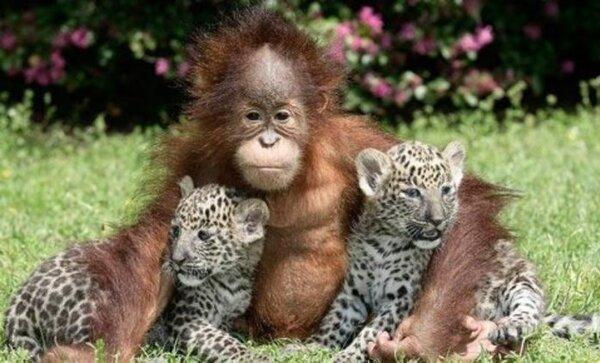 Adorables bébés animaux