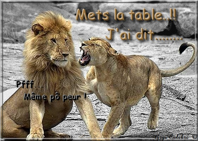"""Résultat de recherche d'images pour """"humour lion et lionne"""""""