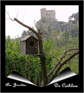 abricotier-mort-et-maison-d-oiseau.jpg