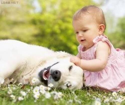Les chiens qui protègent les enfants.(Série 1 de 4 articles.)