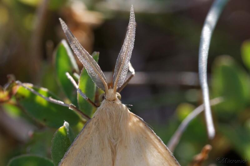 Papillon de nuit (A déterminer)