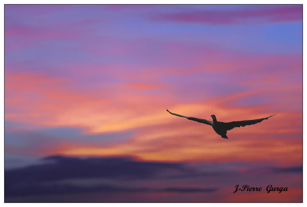 Encore de très belles photos de Jean-Pierre Gurga : crépuscule au lac de Marcenay...
