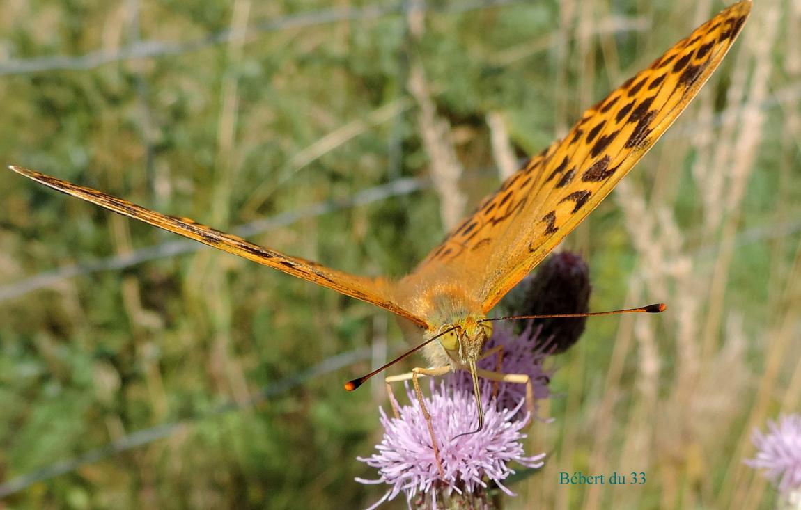 un papillon cet été en Auvergne