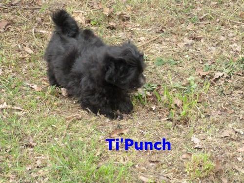 Bienvenue Ti'Punch