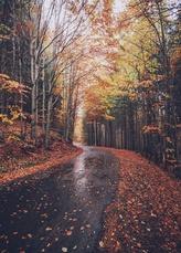 Ce que j'aime en automne