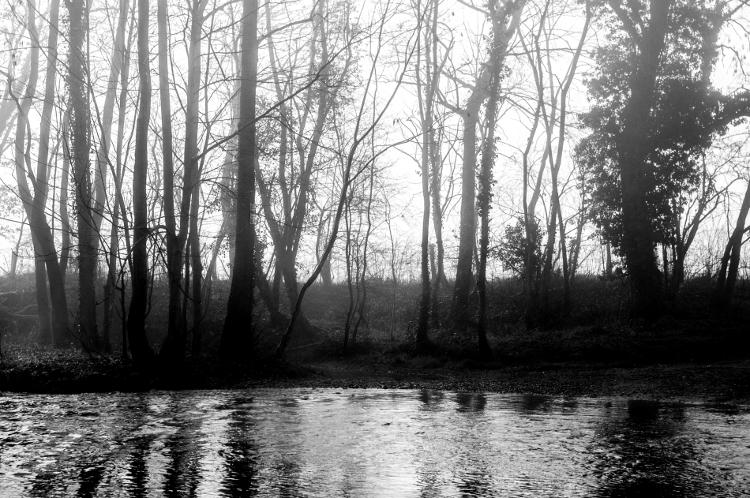 Riorges, allée de Neubourg, bords du Renaison, mars 2014 #3